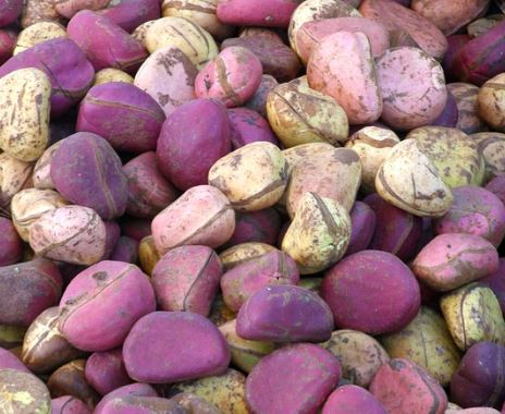 kola nut contains caffeine
