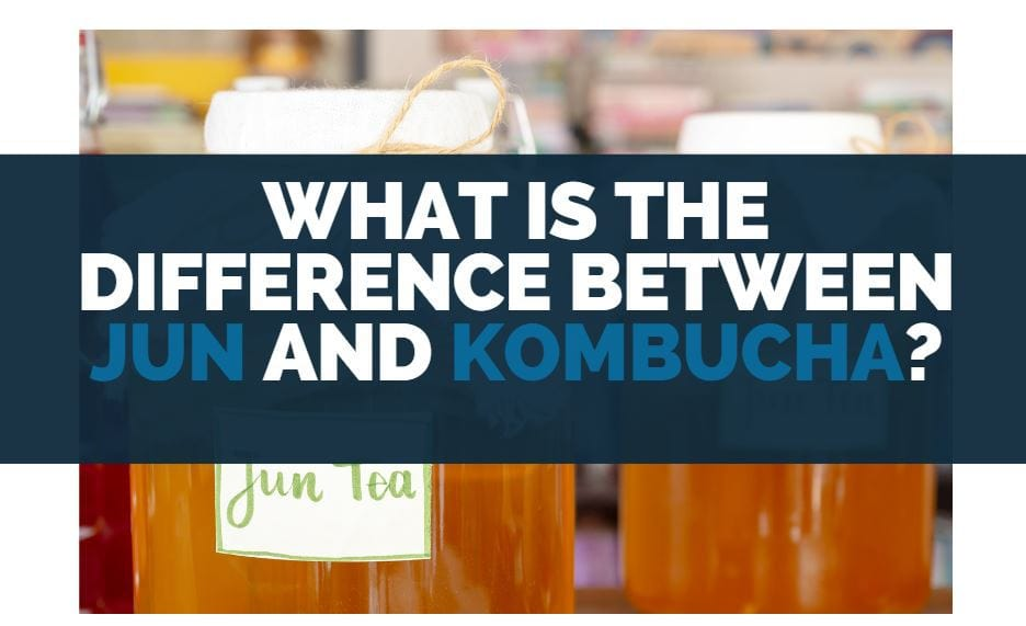 What Is The Difference Between Jun and Kombucha