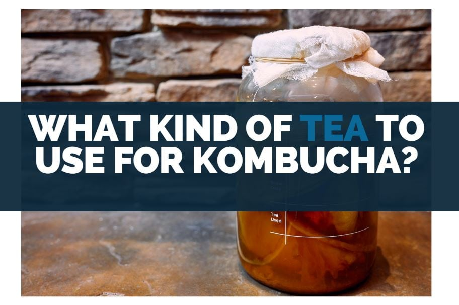 what kind of tea to use for kombucha