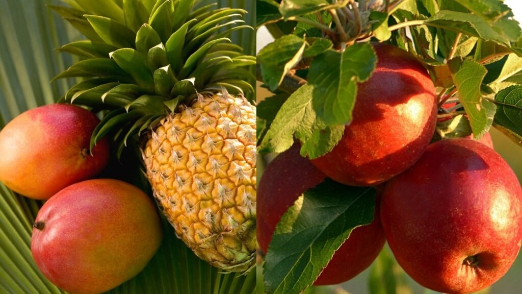 Manzanita Sol flavors