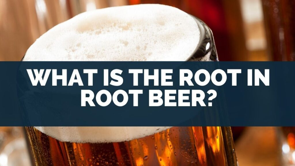 What Is the Root in Root Beer